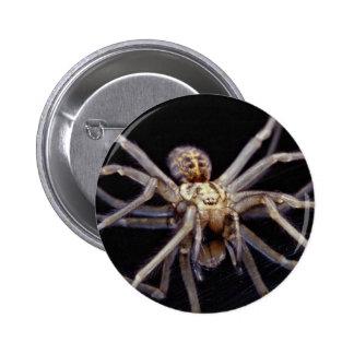 Poisonous menacing recluse spider buttons