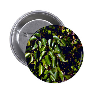 Poisonwood Buttons