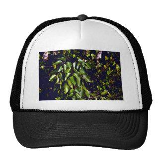 Poisonwood Hat