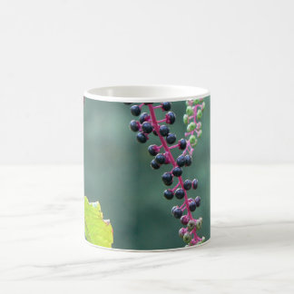 Pokeweed with Ripening Berries Classic White Coffee Mug