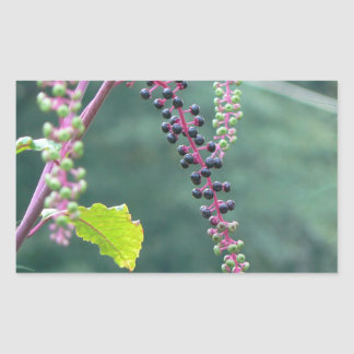 Pokeweed with Ripening Berries Rectangular Stickers