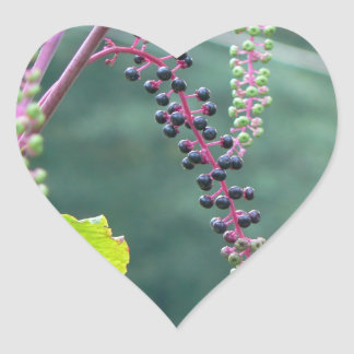 Pokeweed with Ripening Berries Heart Sticker