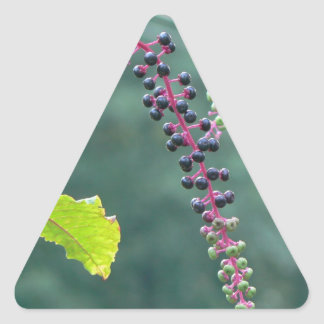 Pokeweed with Ripening Berries Triangle Stickers
