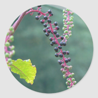 Pokeweed with Ripening Berries Sticker