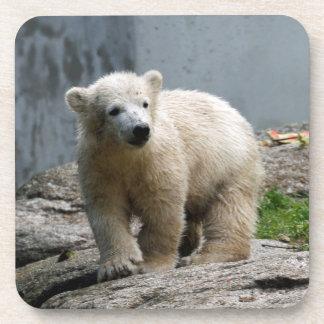 Polar Bear 010 Coasters