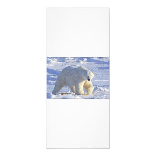 POLAR BEAR 1 CUSTOM RACK CARD