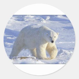 POLAR BEAR 1 ROUND STICKERS