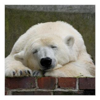 Polar_Bear_2015_0301 Poster
