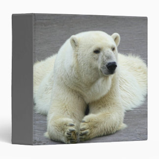 Polar Bear 3 Ring Binder