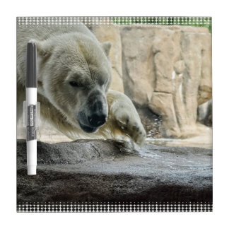 polar-bear-7 Dry-Erase whiteboards