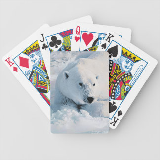 Polar Bear and Snow Bicycle Playing Cards