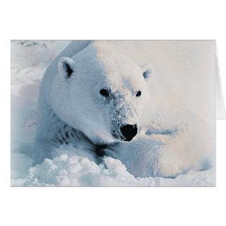 Polar Bear and Snow Card