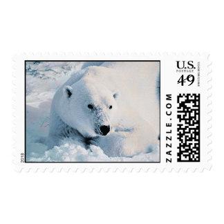 Polar Bear and Snow Postage Stamp