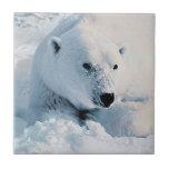 Polar Bear and Snow Tile