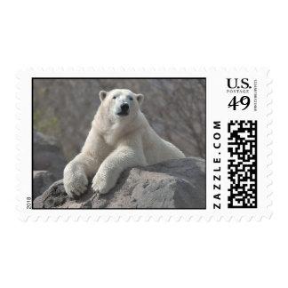 Polar Bear at Ease Postage