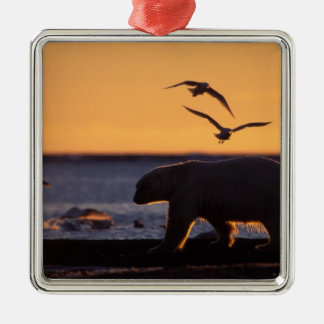 Polar bear at sunrise with glaucous-winged square metal christmas ornament