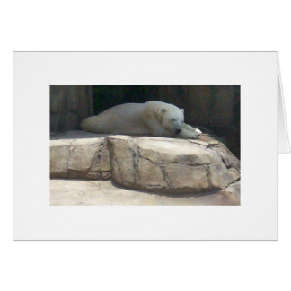 Polar Bear at the Pittsburgh Zoo and Aquarium Stationery Note Card