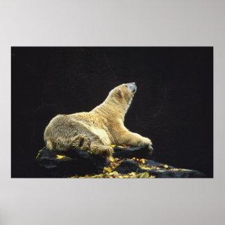 Polar Bear Attitude Poster