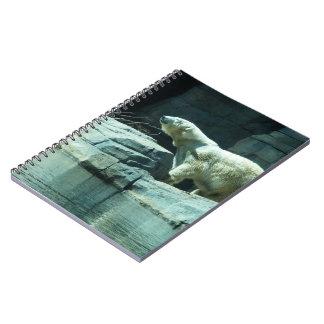 Polar Bear: Berlin Notebook