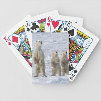 Polar bear bicycle playing cards