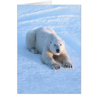 Polar Bear Blue Card