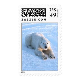 Polar Bear Blue Postage Stamps