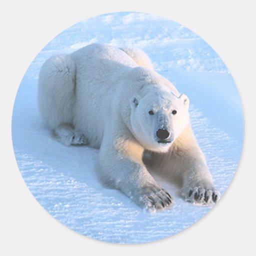 Polar Bear Blue Round Sticker