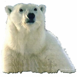 """POLAR BEAR CHIEF"" Photo Sculpture Gift Item"