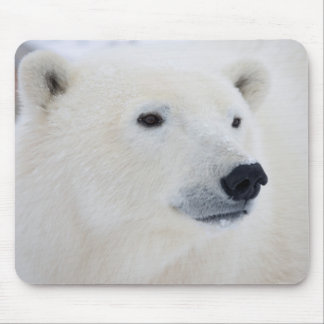 Polar Bear Churchill Mouse Pad