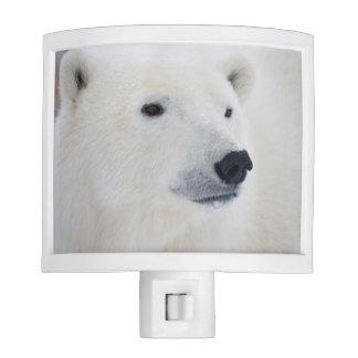 Polar Bear Churchill Night Light