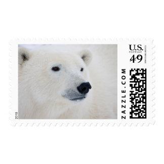 Polar Bear Churchill Postage