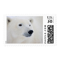 Polar Bear Churchill Postage