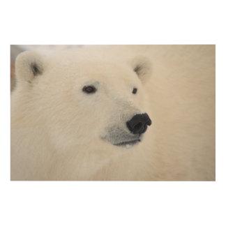 Polar Bear Churchill Wood Print
