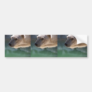 Polar Bear Close Up Portrait Bumper Sticker