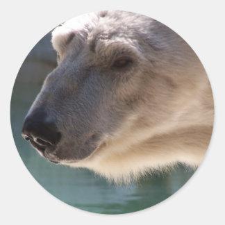 Polar Bear Close Up Portrait Classic Round Sticker