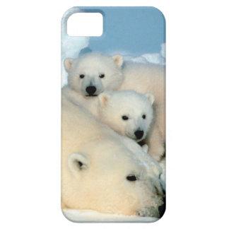 Polar bear cub 1 iPhone SE/5/5s case
