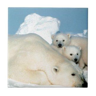 Polar bear cub 1 tiles