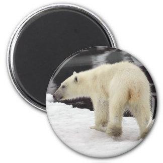 Polar bear cub 2 inch round magnet