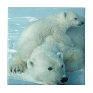 Polar bear cub and mom - 2 ceramic tile