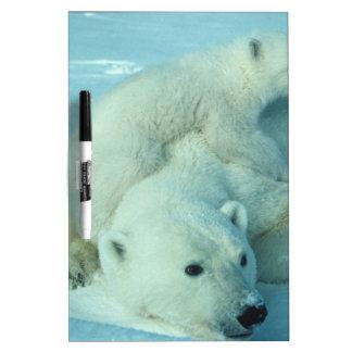 Polar bear cub and mom - 2 dry erase whiteboards