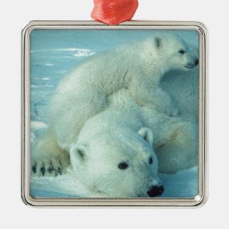 Polar bear cub and mom - 2 metal ornament