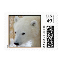 Polar Bear Cub Postage Stamp (SMALL)