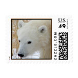Polar Bear Cub Postage Stamp (SMALL)