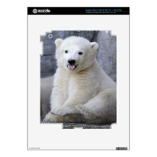 Polar Bear Cub iPad 3 Skins