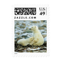 Polar Bear Cub With Mother Postage