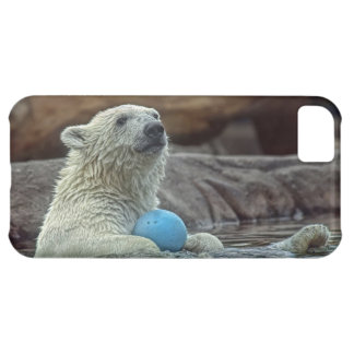 Polar Bear Cub with Toy iPhone 5C Covers