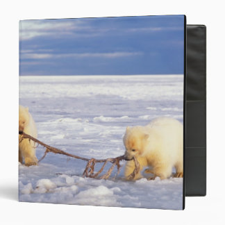 Polar bear cubs and meat on pack ice of frozen binder