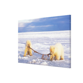 Polar bear cubs and meat on pack ice of frozen canvas print