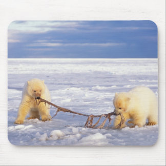 Polar bear cubs and meat on pack ice of frozen mouse pad