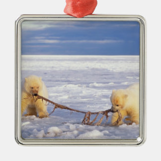 Polar bear cubs and meat on pack ice of frozen square metal christmas ornament